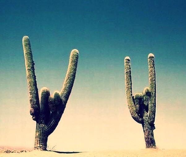 Mex! – Travel